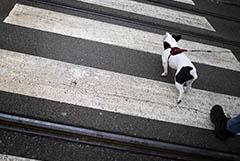 Гинцбург назвал заражение животных следующим этапом пандемии COVID