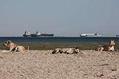 Более 200 судов ждут в очереди на проход через Суэцкий канал