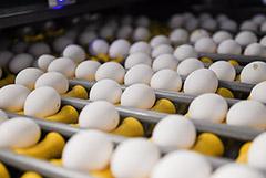 Курятина и яйца стали лидерами по темпам роста цен на продукты в марте