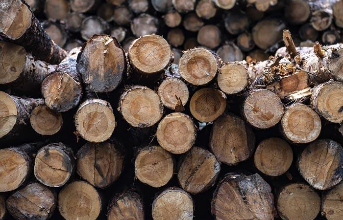"""Появление в лесах """"черных лесорубов"""" приравняют к незаконной вырубке"""