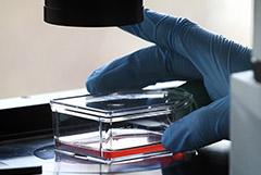 ФМБА в июле начнет клинические испытания вакцины от COVID-19