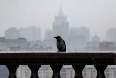 Дождь в московском регионе будет идти до утра воскресенья