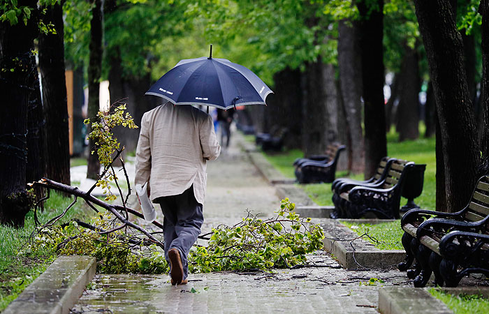 Сильный ветер повалил в Москве более десятка деревьев