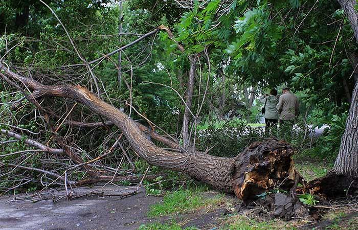 Буря в Петербурге повалила 161 дерево