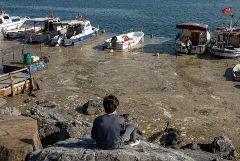 Эрдоган пообещал справиться с покрывшей Мраморное море слизью