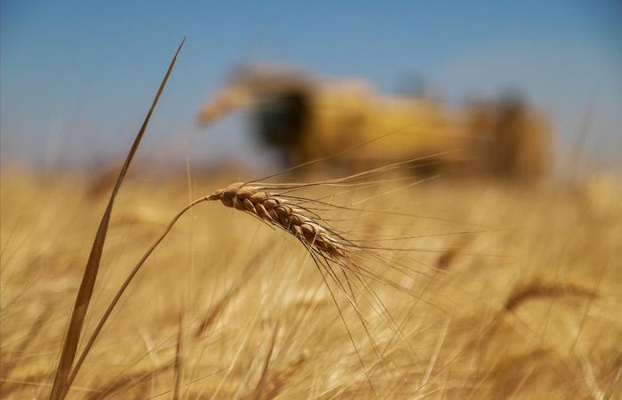 Экспортная пошлина на пшеницу из РФ с 16 июня вырастет до $33,3