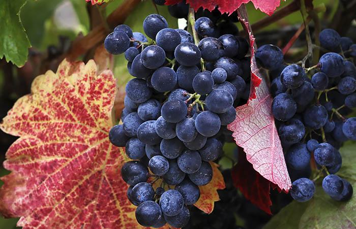 Год действия закона о виноделии - есть ясность в понятиях, но интересное впереди. Обзор