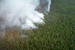 Более миллиона гектаров леса сгорело в Якутии