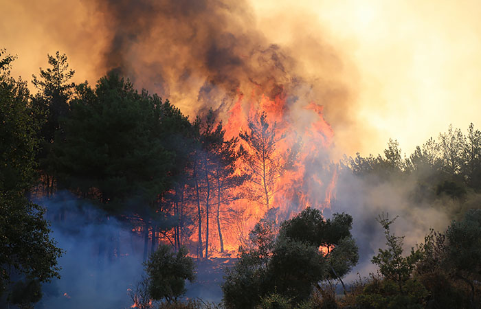 Природный пожар подошел к теплоэлектростанции у турецкого Миляса