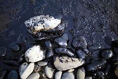 Нефть черноморского разлива. Обобщение