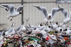 """Аксенов сообщил о """"мусорном коллапсе"""" в городах Крыма"""