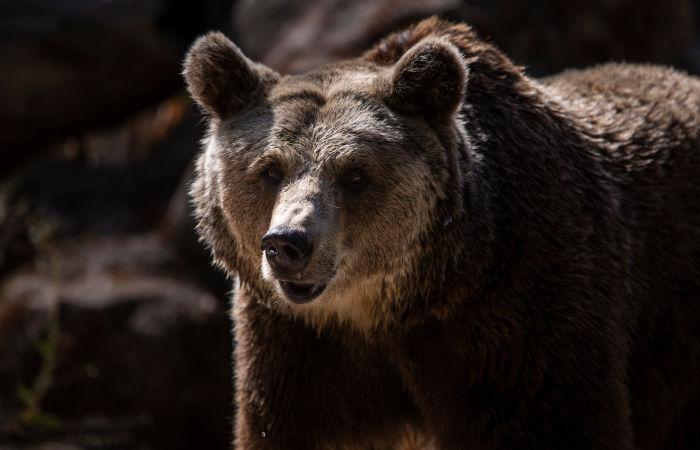 В Иркутской области медведь прогулялся по территории кемпинг-отеля