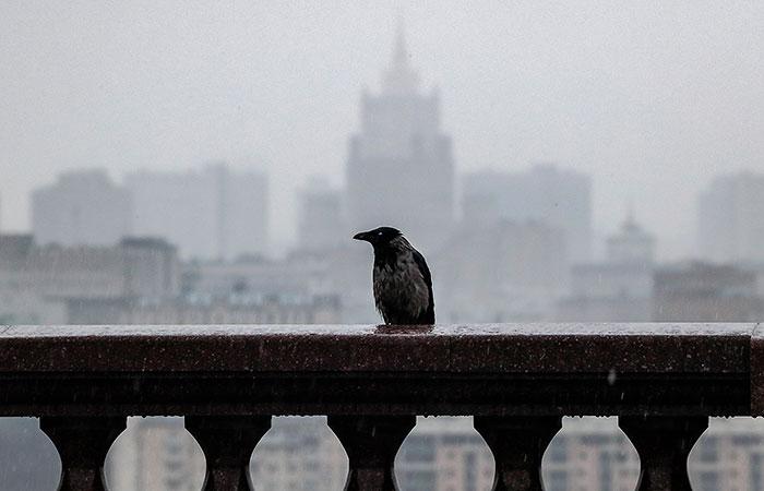 Сентябрь в Москве перевыполнил месячную норму осадков