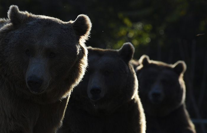 Установлен подозреваемый в отравлении животных в челябинском зоопарке